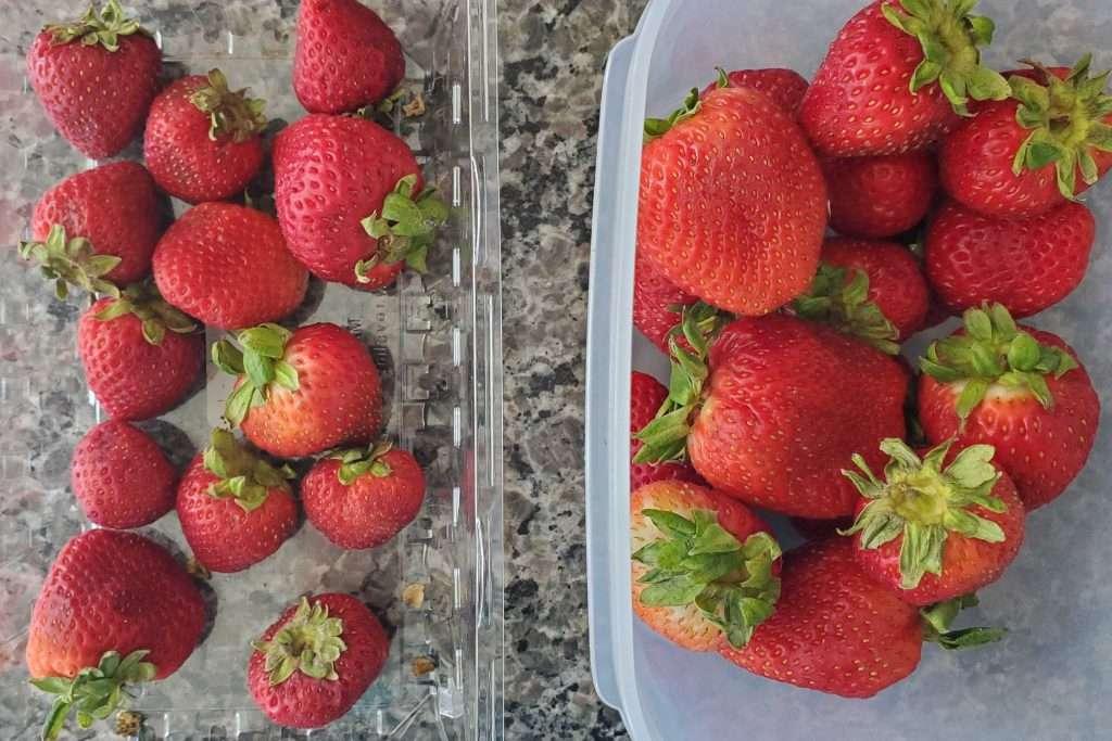 FridgeSmart containers help keep produce fresher for longer!